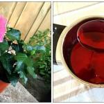 hibiscus_sirup_denlaktosefrieblog